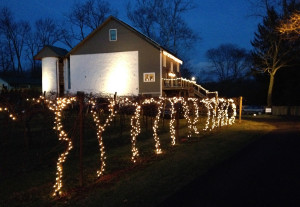 Winery at night Christmas Lights